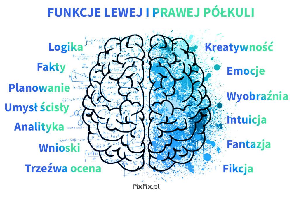 Funkcje prawej i lewej półkuli mózgowej